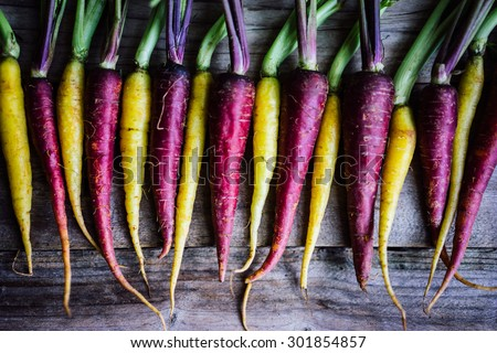 Colorful carrots - stock photo