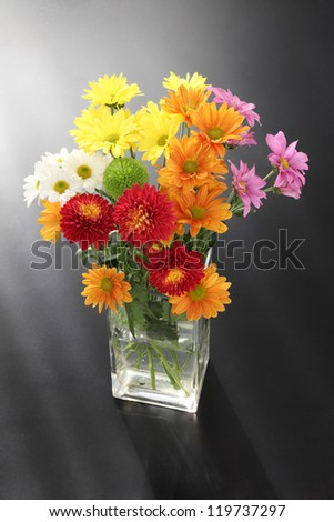 Colorful chrysanthemum with black background - stock photo