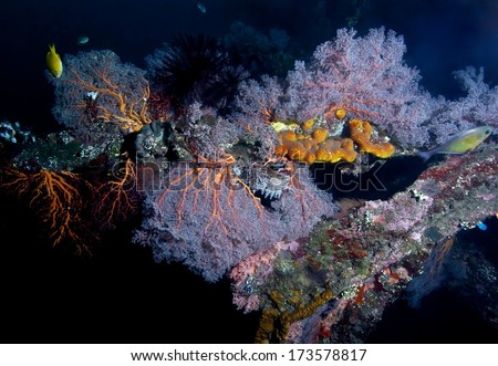 colorful coral on shipwreck marine life of Liberty. - stock photo