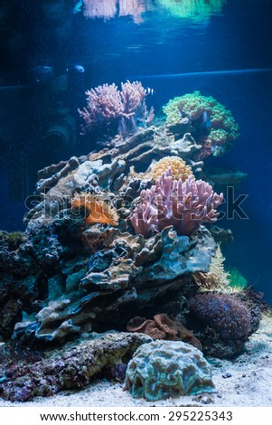 Colorful coral reef inside tropical aquarium tank. - stock photo