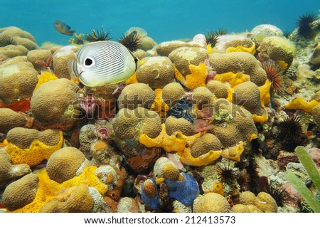 colorful coral reef under water with sea sponge, fan worm, urchin and a foureye butterflyfish, Caribbean - stock photo