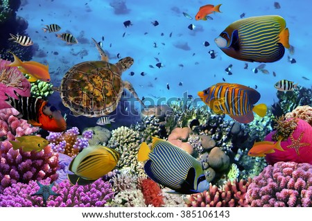 colorful coral reef with many fishes and sea turtle - stock photo