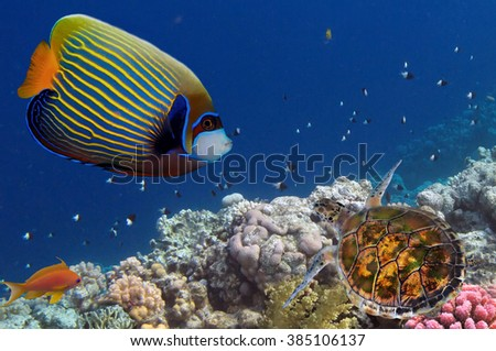 colorful coral reef with many fishes and sea turtle in the Red Sea, Egypt.                           - stock photo