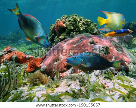 Colorful coral reef with tropical fish and starfish, Caribbean sea, Mexico - stock photo