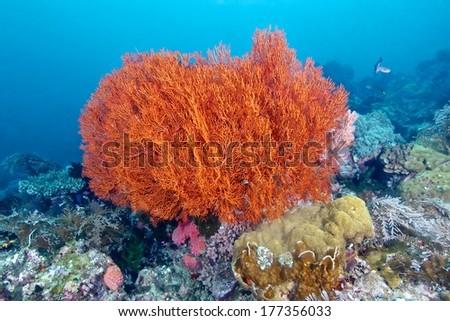 Colorful corals marine life  - stock photo