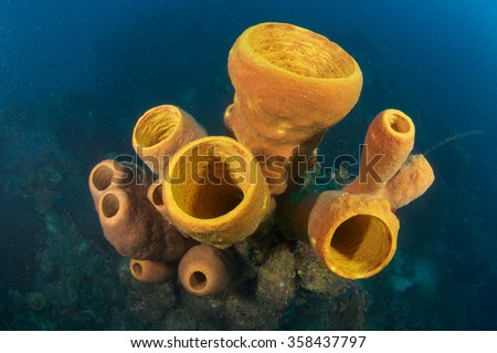 Colorful Corals on the Reef - stock photo