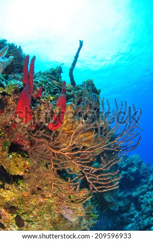 Colorful Corals on the wall with sunburst, Grand Cayman - stock photo