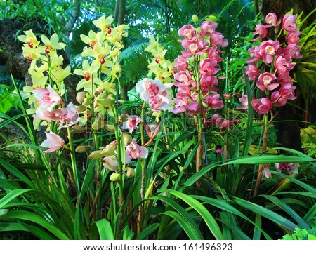 Cymbidium Orchid Colors Colorful Cymbidium Orchids