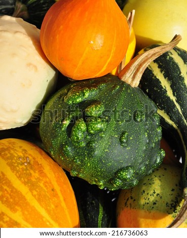 Colorful decorative pumpkins collection in the autumn sun - stock photo