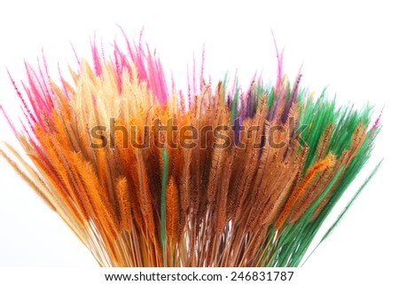 Colorful dry grass on white background - stock photo
