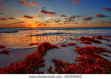 Colorful early sunrise over beautiful sea shore with a bright seaweed foreground - stock photo