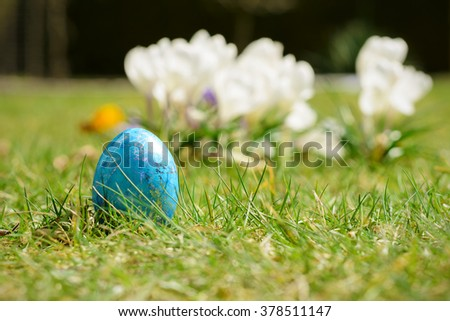 Colorful easter egg in front of white crocus flowers on green grass - stock photo
