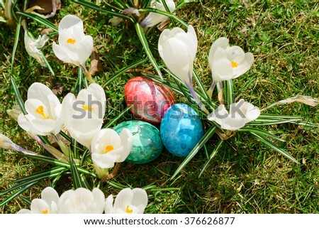 Colorful easter eggs between white crocus flowers on green grass   - stock photo