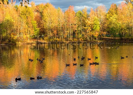 Colorful Fall foliage on Holiday Lake in Manalapan New Jersey. - stock photo