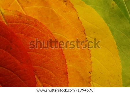 colorful fall leaf background - stock photo