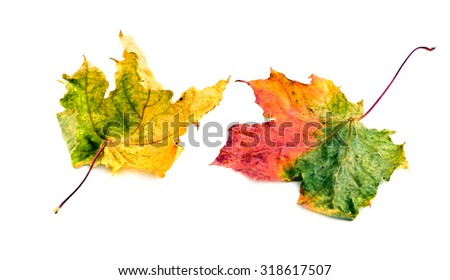 Colorful Fall leaves isolated on white - stock photo