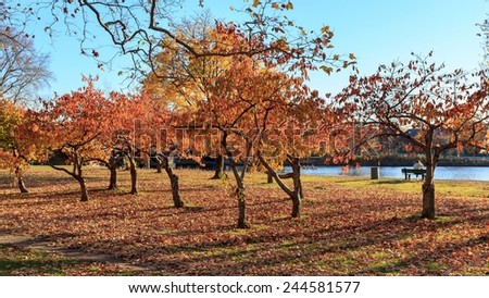 Colorful fall trees on the banks of the Charles River at Harvard University campus in Cambridge, MA, USA. - stock photo