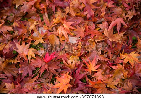 Colorful fallen leaves on ground in autumn season - stock photo