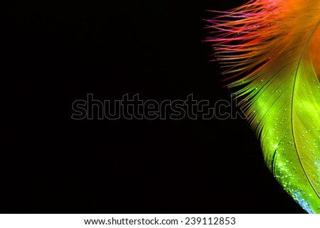 colorful feather close up macro background with place for your design - stock photo