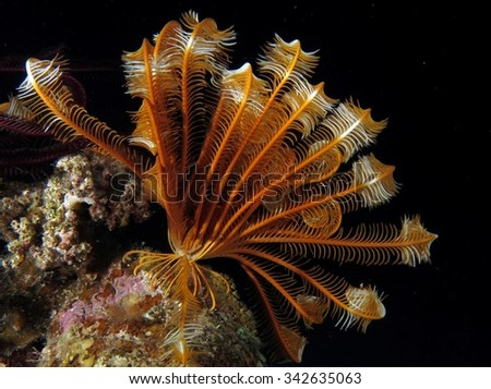 Colorful feather star at night - stock photo