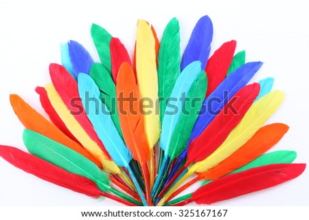 Colorful feathers isolated on white background - stock photo