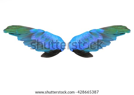 Colorful feathers wings isolated on white background - stock photo