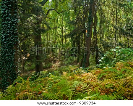 Colorful ferns, climbing ivy and vibrant green trees highlight this woods in Holmdel, New Jersey. - stock photo