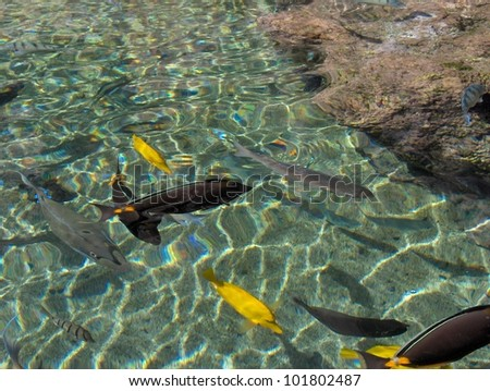 Ms k 39 s portfolio on shutterstock for Colorful pond fish