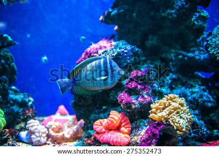 Saltwater Stock Photos Images Pictures Shutterstock