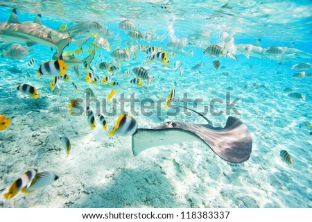 Colorful fish, stingray and black tipped sharks underwater in Bora Bora lagoon - stock photo