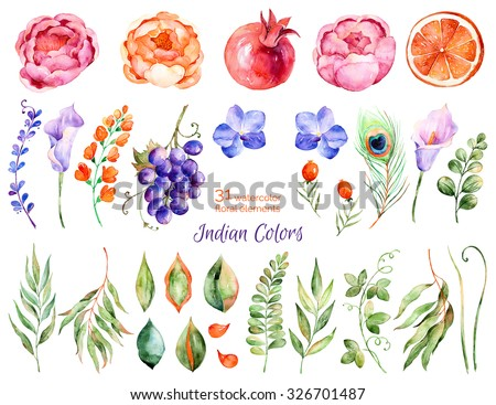 Colorful floral collection with roses,flowers,leaves,pomegranate,grape,callas,orange,peacock feather,Colorful floral collection with 31 watercolor elements.Set of floral elements for your compositions - stock photo