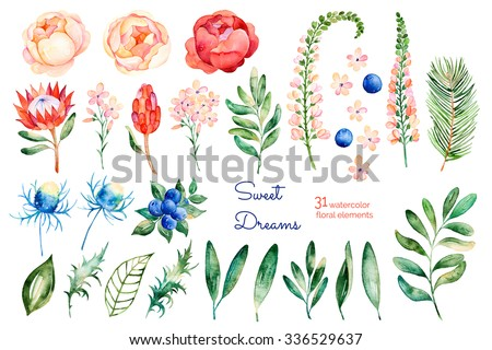 Colorful floral collection with roses,flowers,leaves,protea,blue berries,spruce branch,eryngium.Colorful floral collection with 31 watercolor elements.Set of floral elements for your own compositions - stock photo