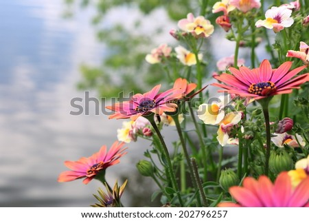Colorful flower by water reflected sky - stock photo