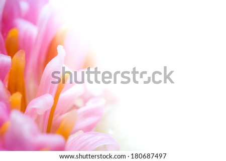 Colorful flower closeup. Selective focus on beautiful background. - stock photo