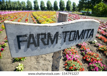 Colorful flower in Farm Tomita - stock photo