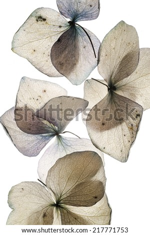 colorful flower petals on white close up - stock photo