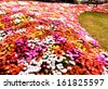Colorful flowerbed in garden - stock photo