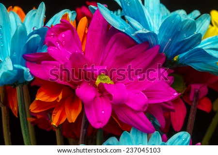 Colorful flowers against a black background in a studio environment - stock photo