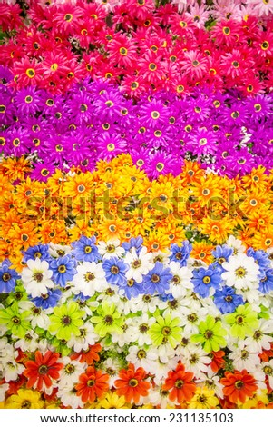 Colorful flowers background - stock photo