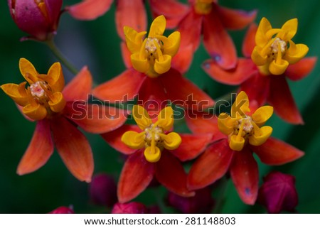 Colorful flowers group - stock photo
