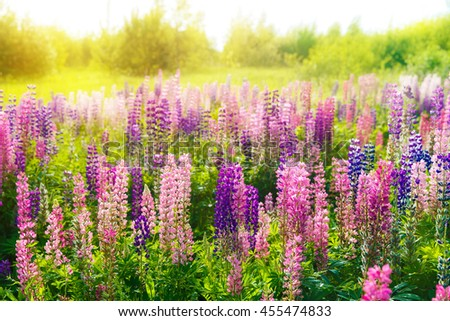 Colorful flowers in field at sunset. - stock photo