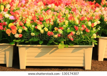 colorful flowers in flower pot and other flowers - stock photo