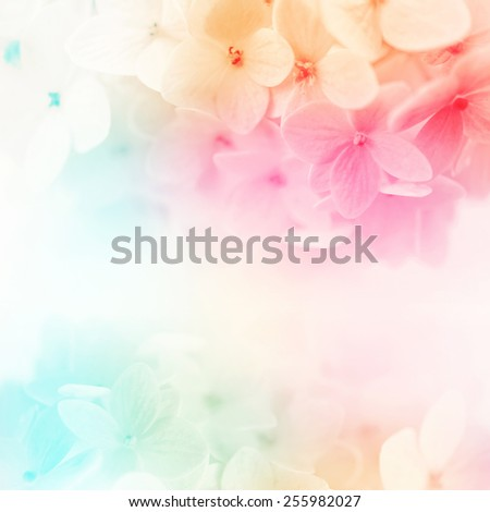 colorful flowers in soft color and blur style for background - stock photo
