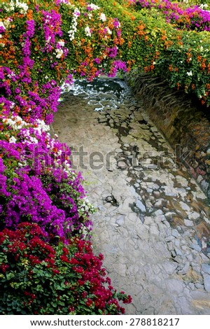 Colorful flowers line a path to the ocean.                                - stock photo