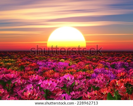 Colorful flowers on a background of a sunset - stock photo