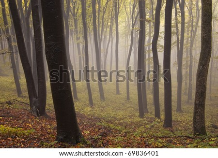 colorful forest with dark trees and fog in autumn - stock photo
