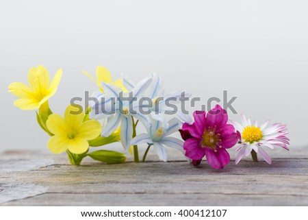 colorful fresh spring flowers on wood and white background - stock photo