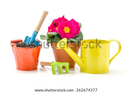 Colorful garden tools and a Primrose on a white background - stock photo