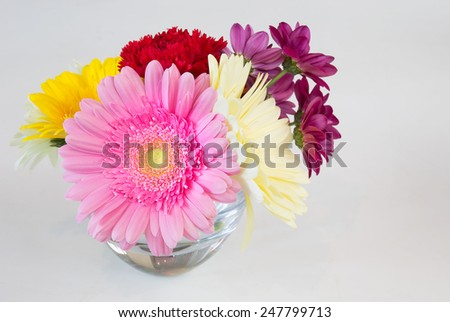 Colorful Gerber plants in glass  pots isolated over white  - stock photo
