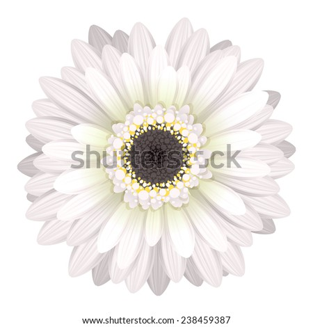 Colorful gerbera flower head - white and black colors. - stock photo